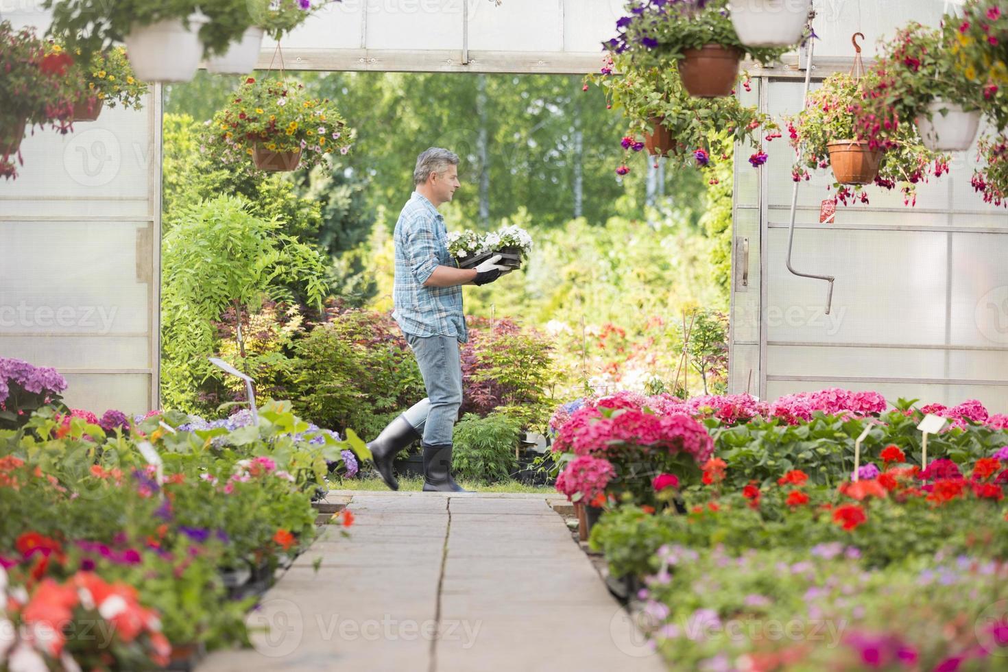 Gärtner tragen Kiste mit Blumentöpfen beim Gehen außerhalb des Gewächshauses foto