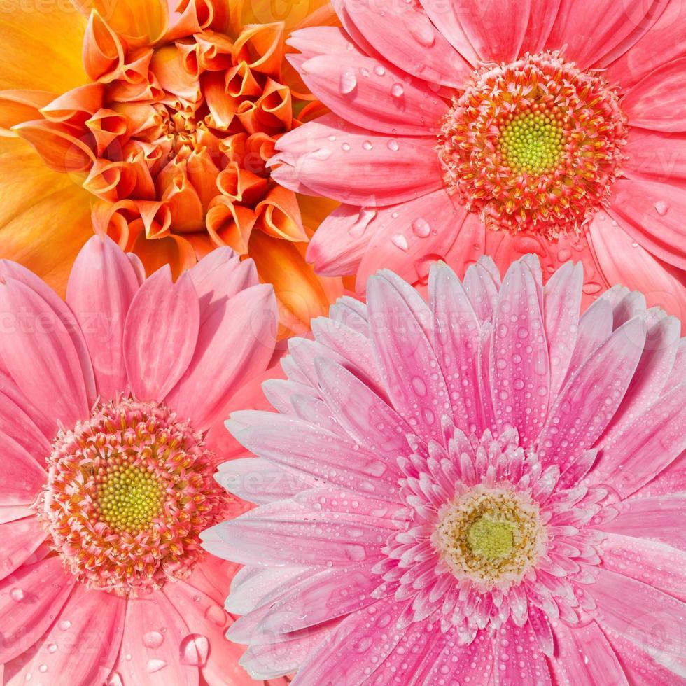 Blumen Hintergrund foto
