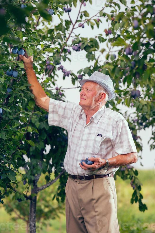 Bauer und sein Obstgarten foto