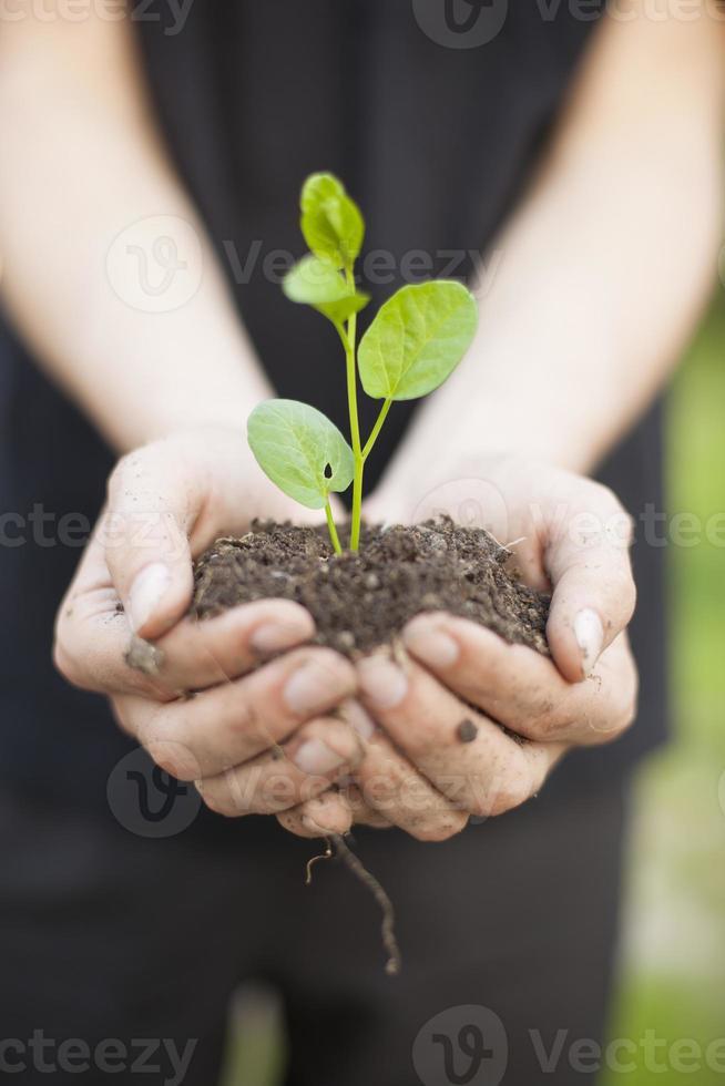 Hände halten Samenlänge foto
