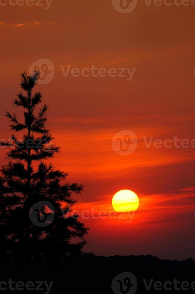 alleinige Kiefer: böser roter Sonnenuntergangshimmel foto