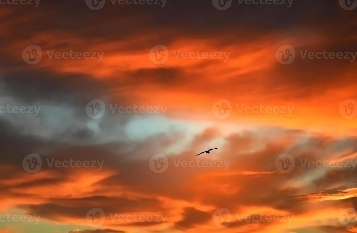 Vogel fliegt auf einem abgefeuerten Himmel foto