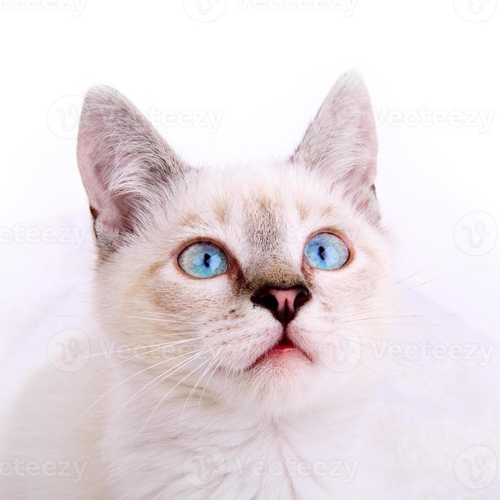 Kätzchenporträt foto
