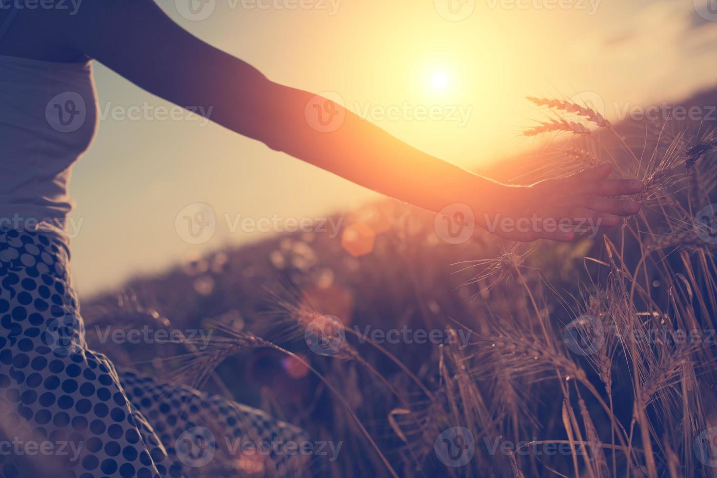 Mädchenhand berührt Weizenspitzen foto