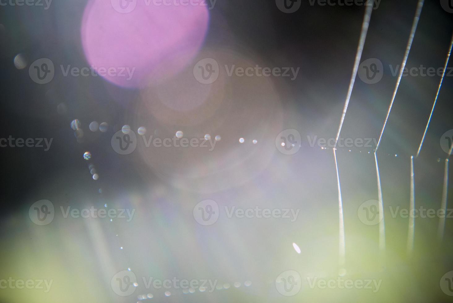 Spinnennetz Musterhintergrund foto