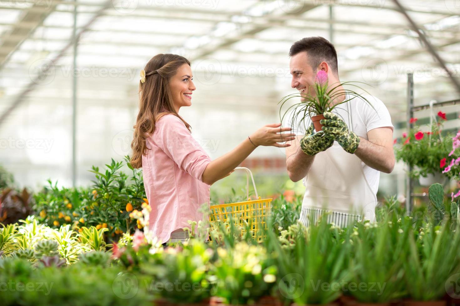 Verkäufer empfehlen Blumen in Gewächshäusern foto