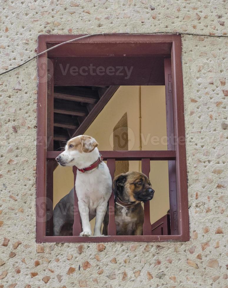 Hunde schauen von ihrem Hausfenster aus zu. Rhodos. Griechenland foto