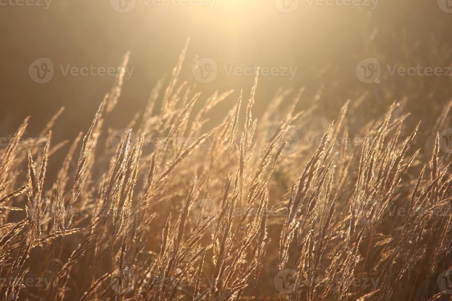 hintergrundbeleuchtetes Gras foto