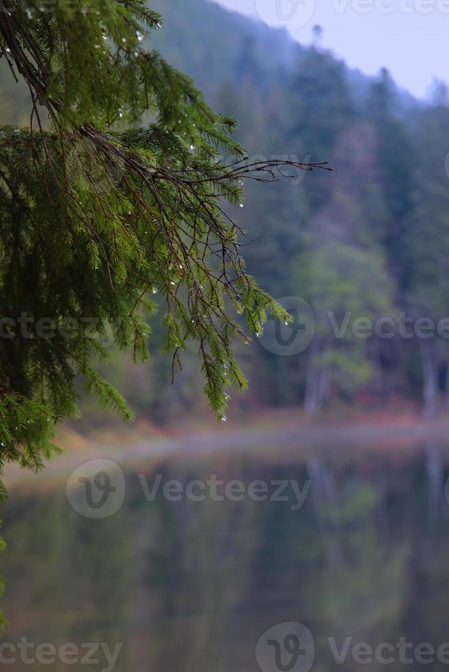 Regentropfen auf Fichtenzweig auf einem Hintergrund des Sees foto