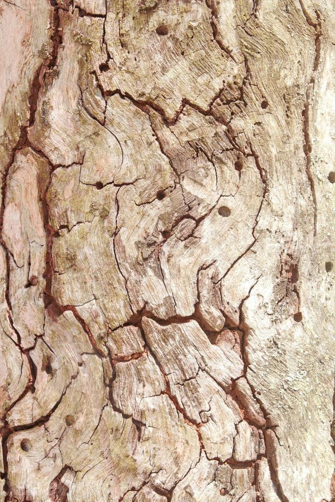 Baum Textur foto