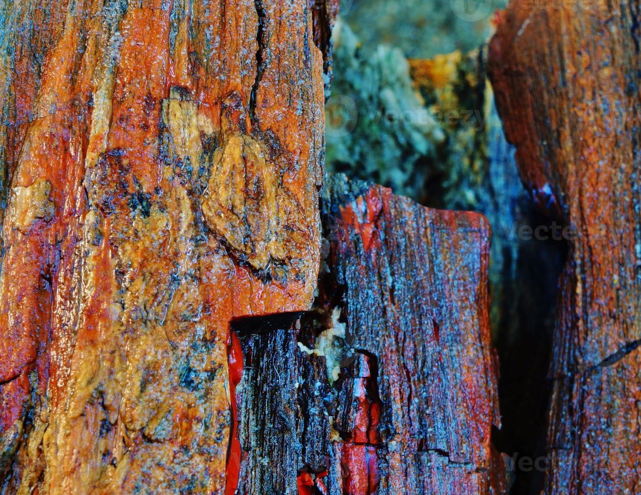 versteinertes Holz foto