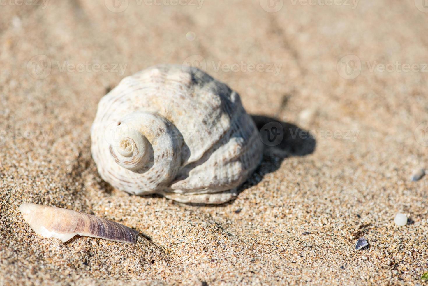 Muschel am Strand - Kopierraum foto