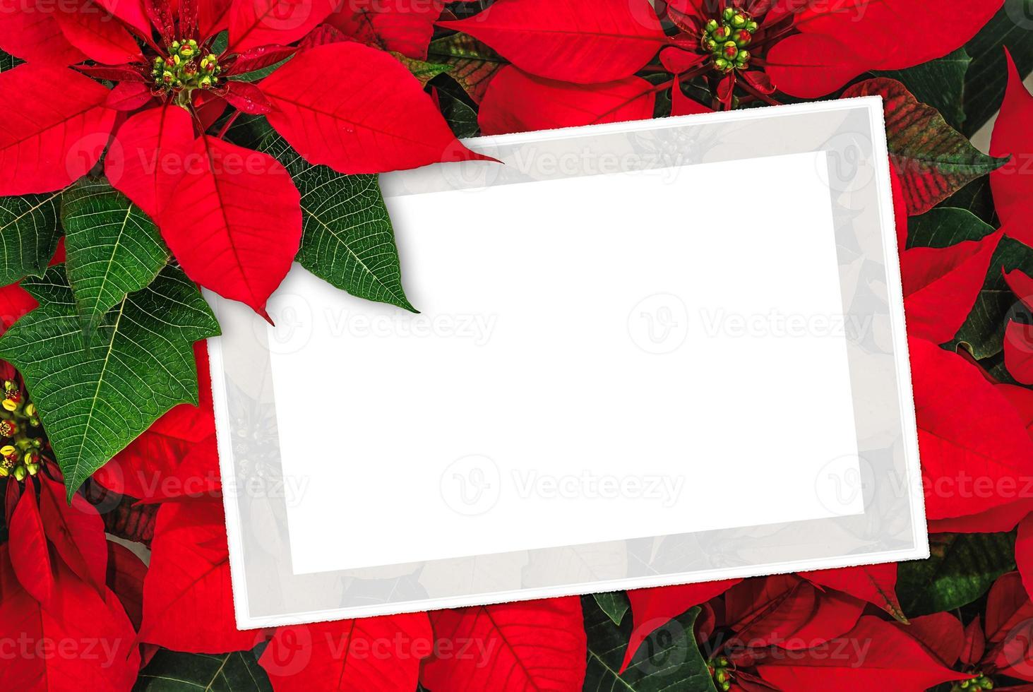 Weihnachtsgrußkarte Weihnachtssterndekoration mit Kopienraum foto