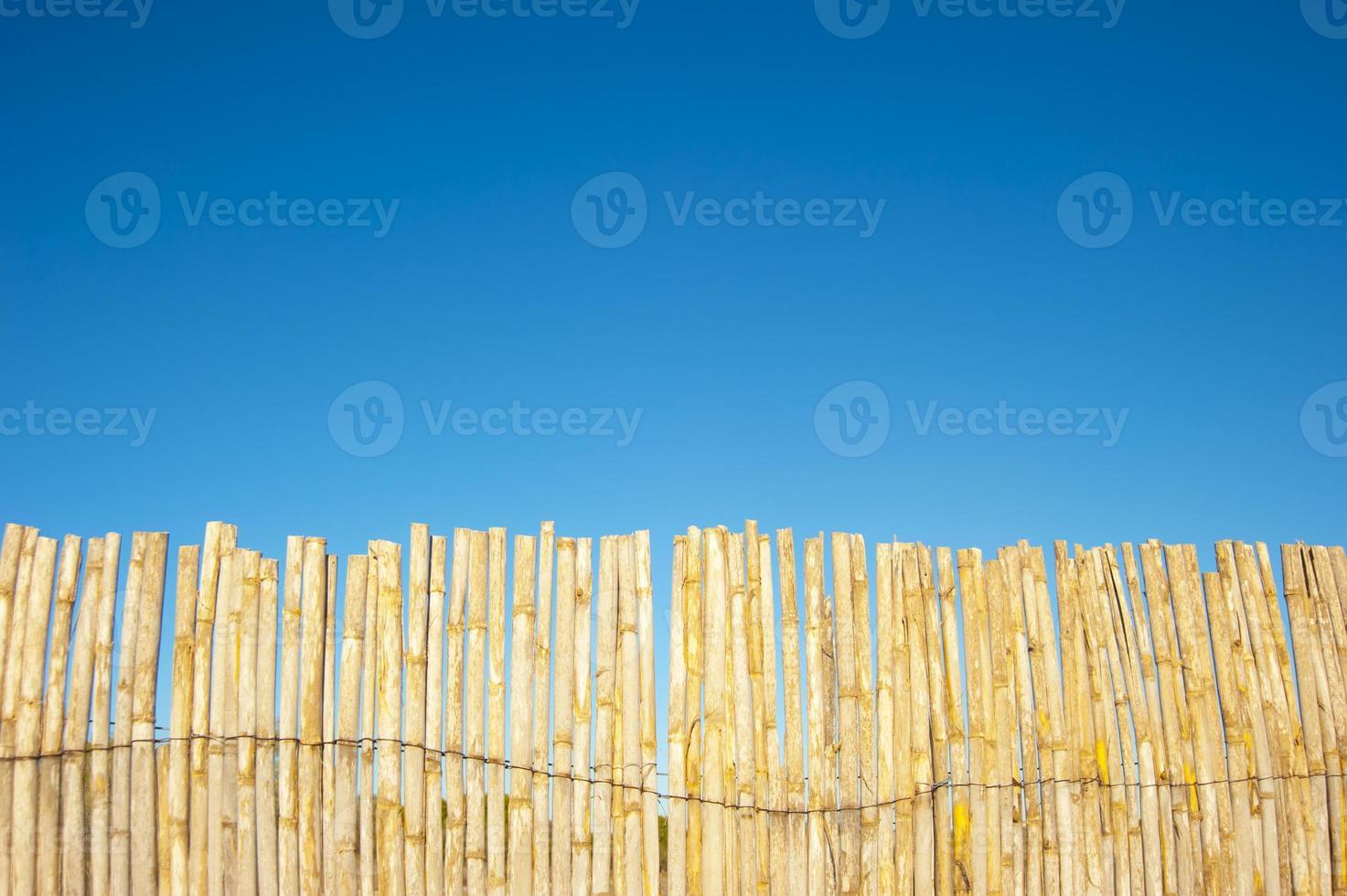 Bambusbaumhintergrund mit blauem Himmel foto