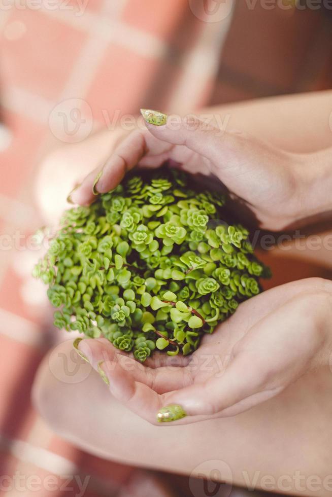Hände halten Topfpflanze foto