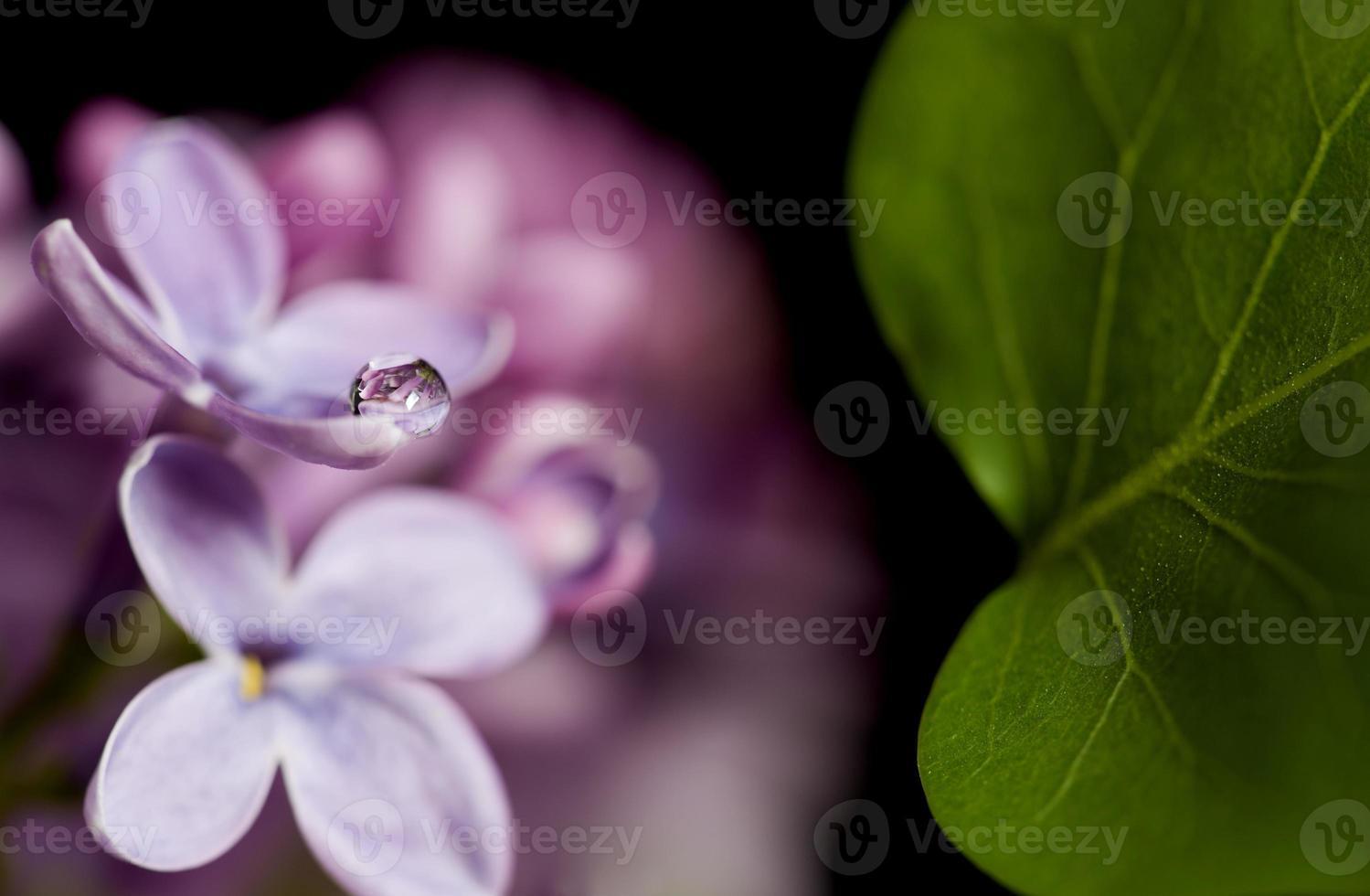 Nahaufnahme lila foto
