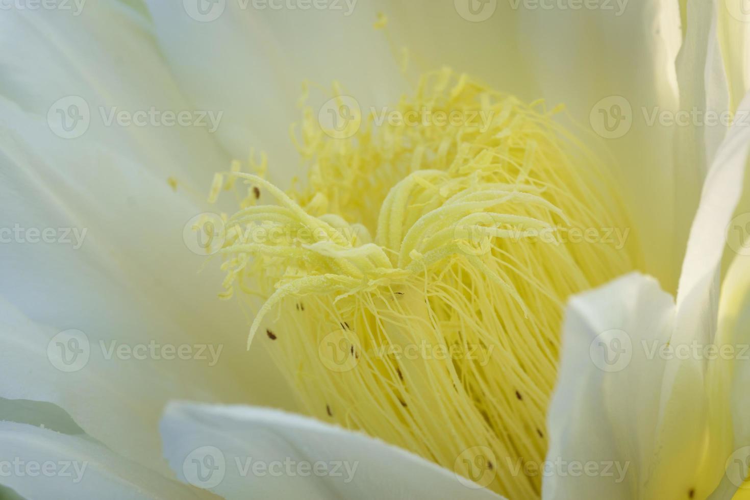 Nahaufnahme als lange Blume foto