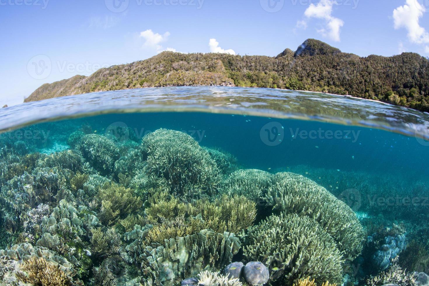 Korallenriff und Wayag-Inseln, Raja Ampat foto