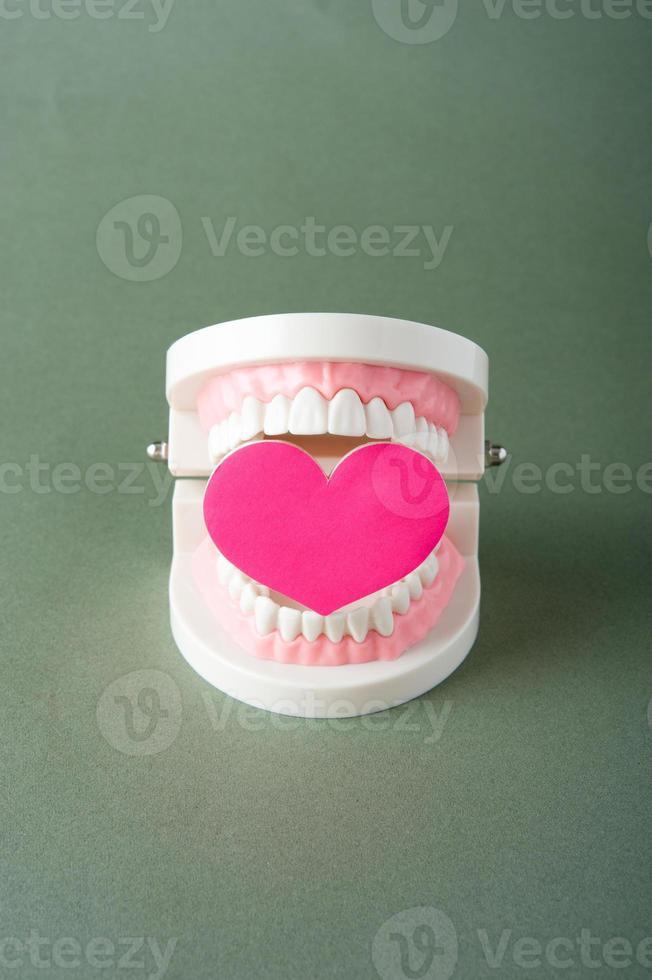 Modell der Zähne foto