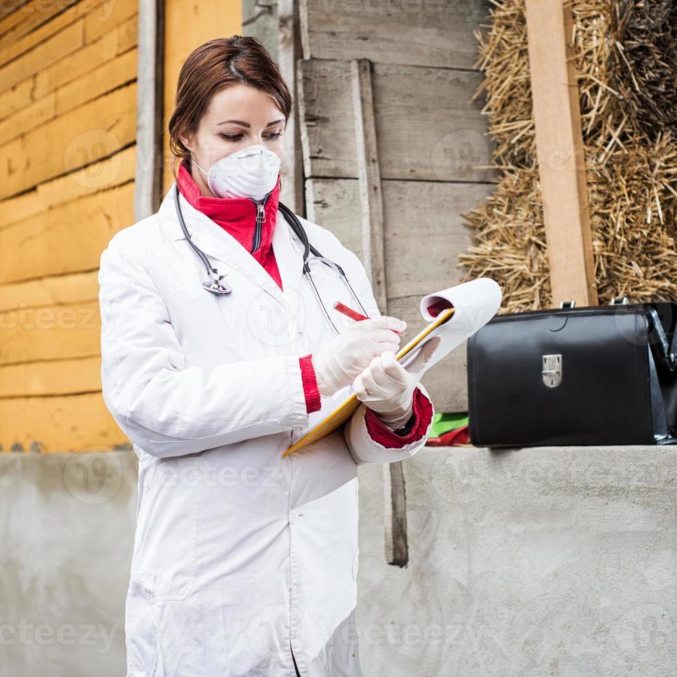 Tierarzt untersucht Schwein. foto