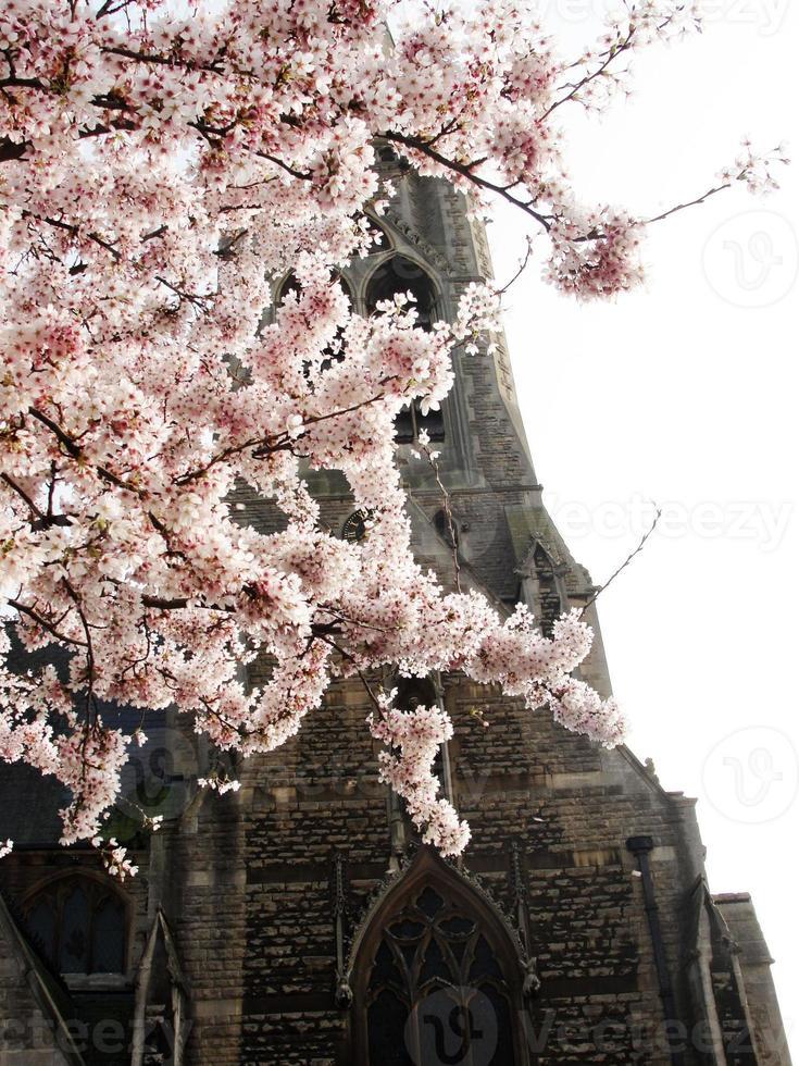Sakura im Bad foto
