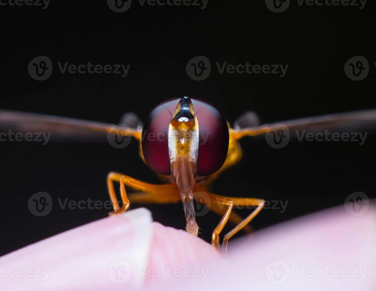 Auge des Insekts foto
