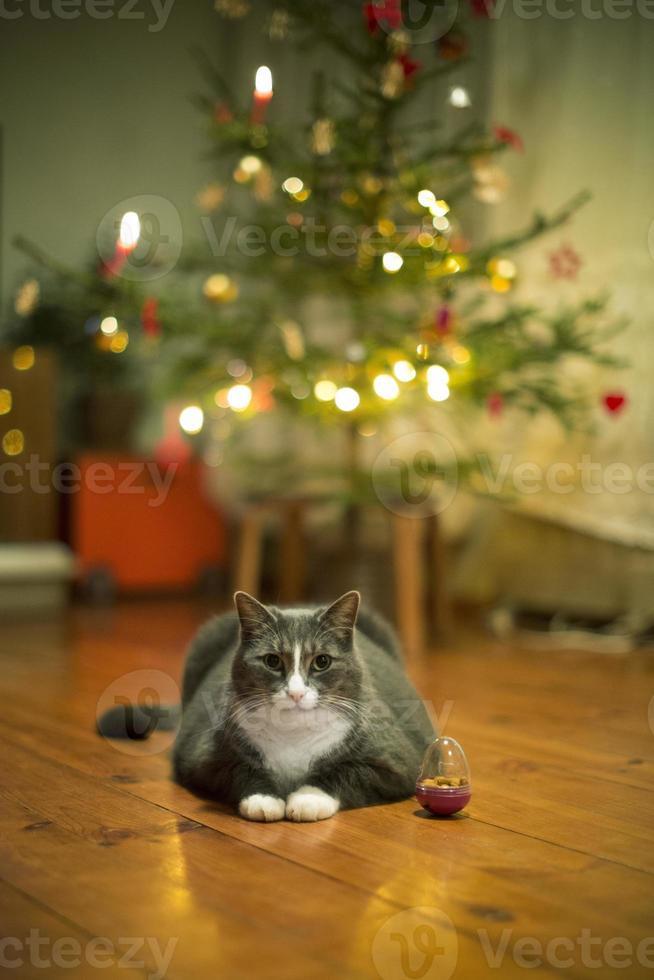 Katze unter dem Weihnachtsbaum foto