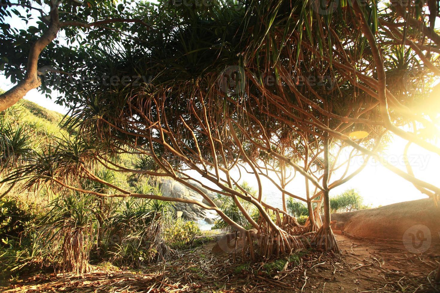 Dschungel auf einer schönen Insel foto