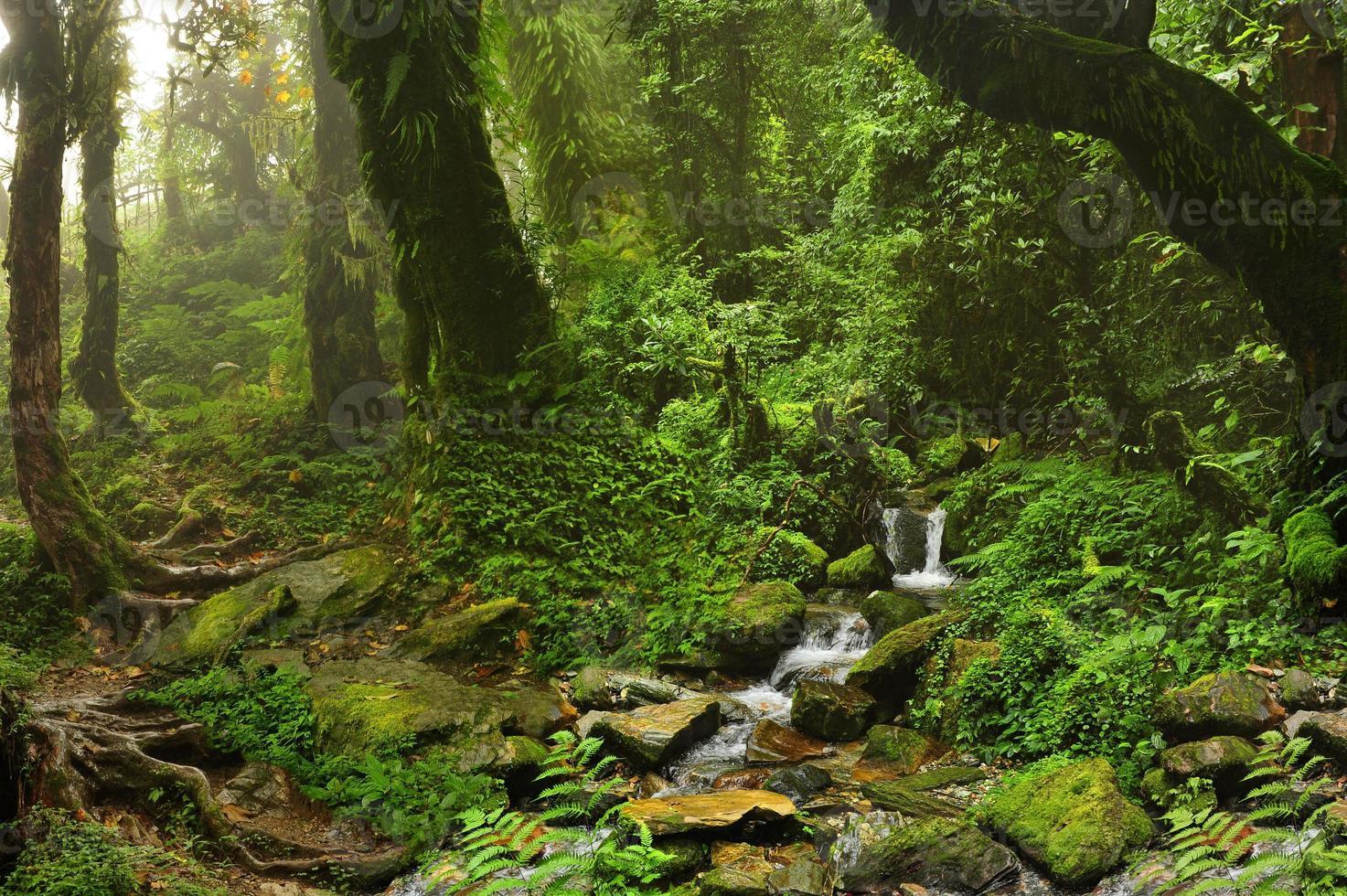 Nepal Dschungel foto