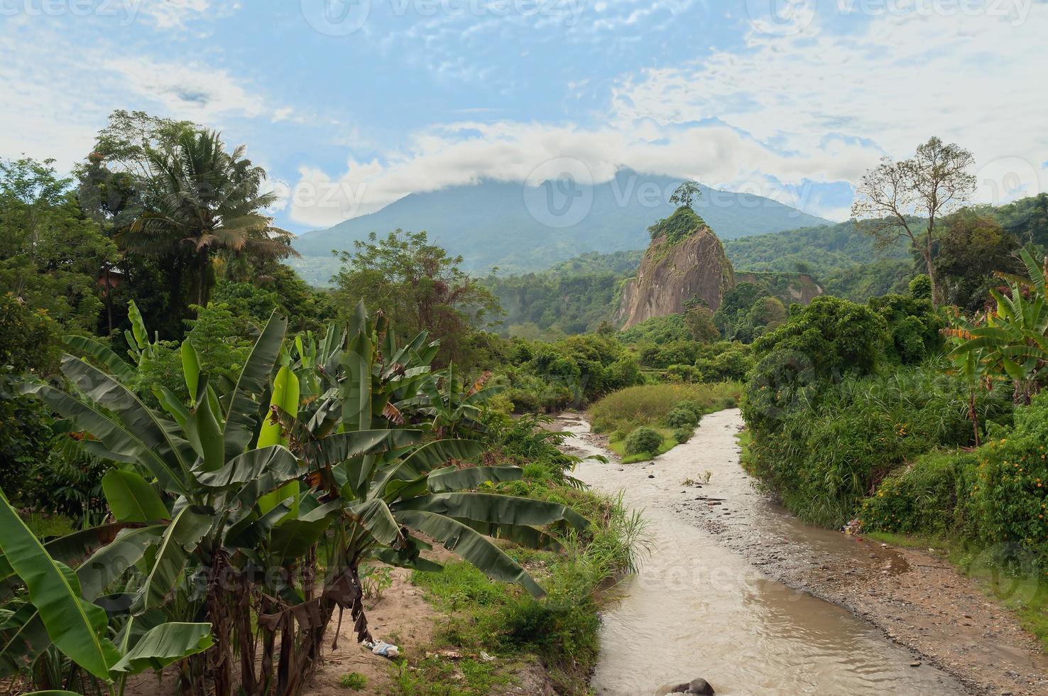 im Dschungel foto