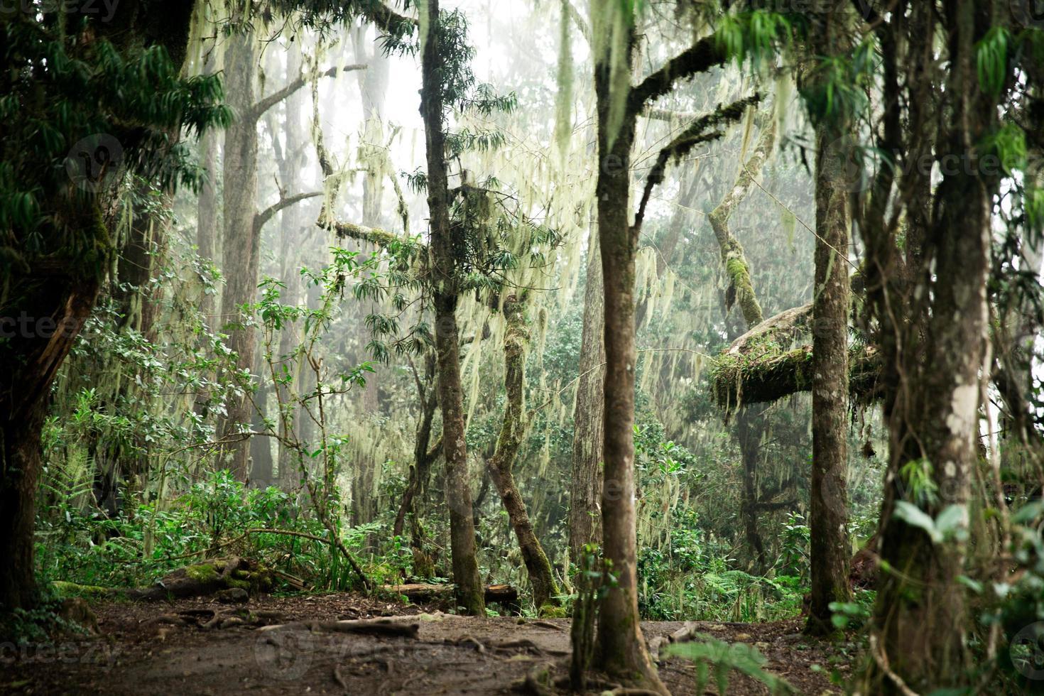 verzauberter Dschungel foto