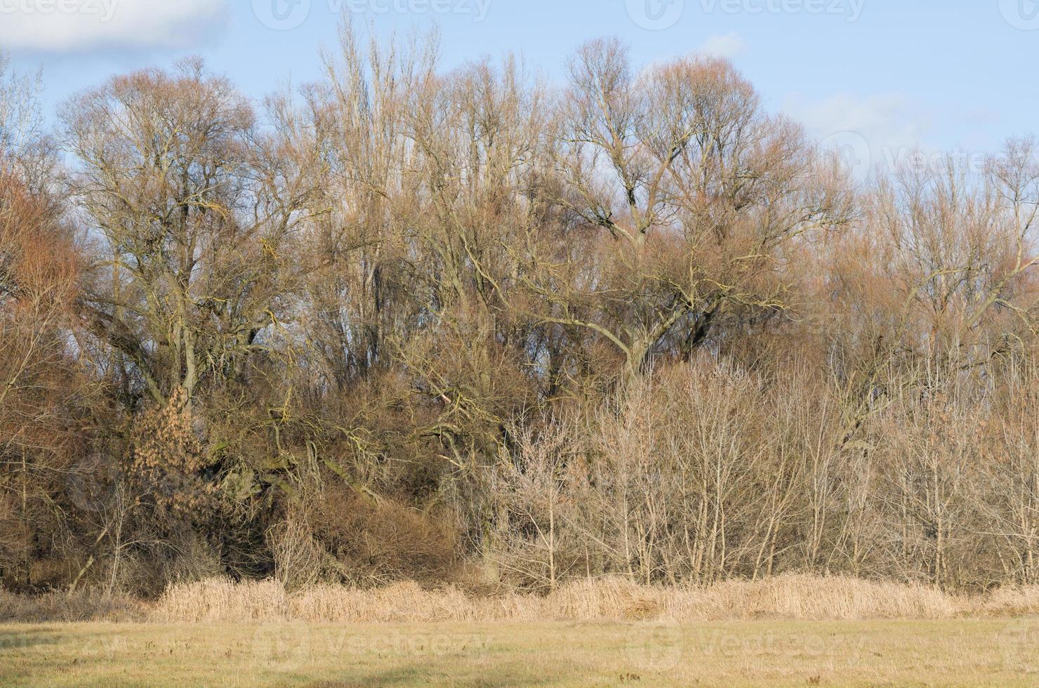 Dschungel der Zweige foto
