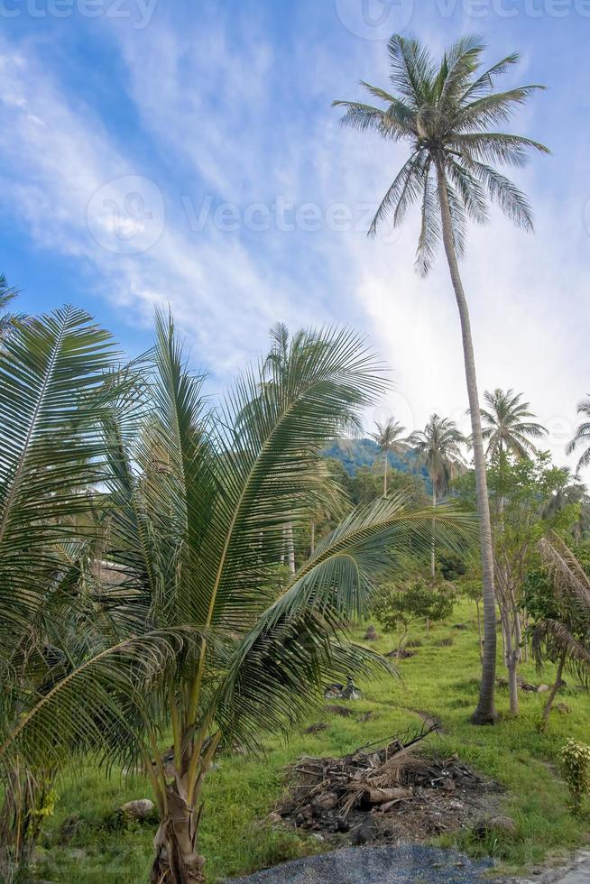Palmen, Dschungel foto