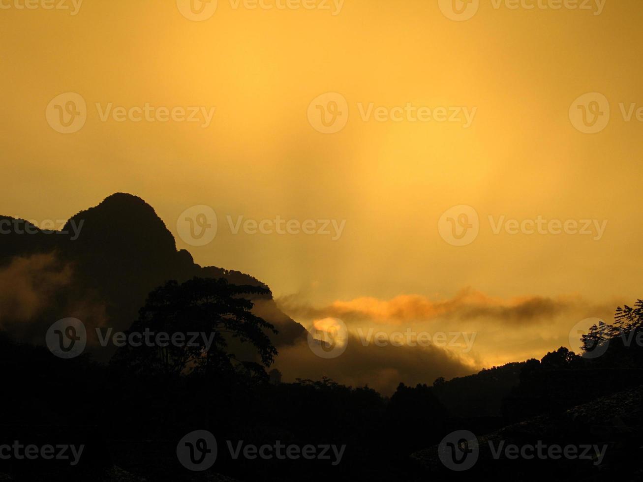 Tagesanbruch im Dschungel foto