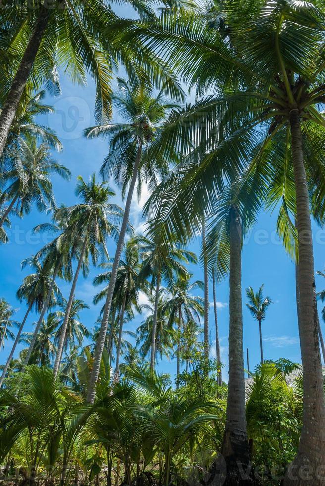 Kokosnussdschungel foto