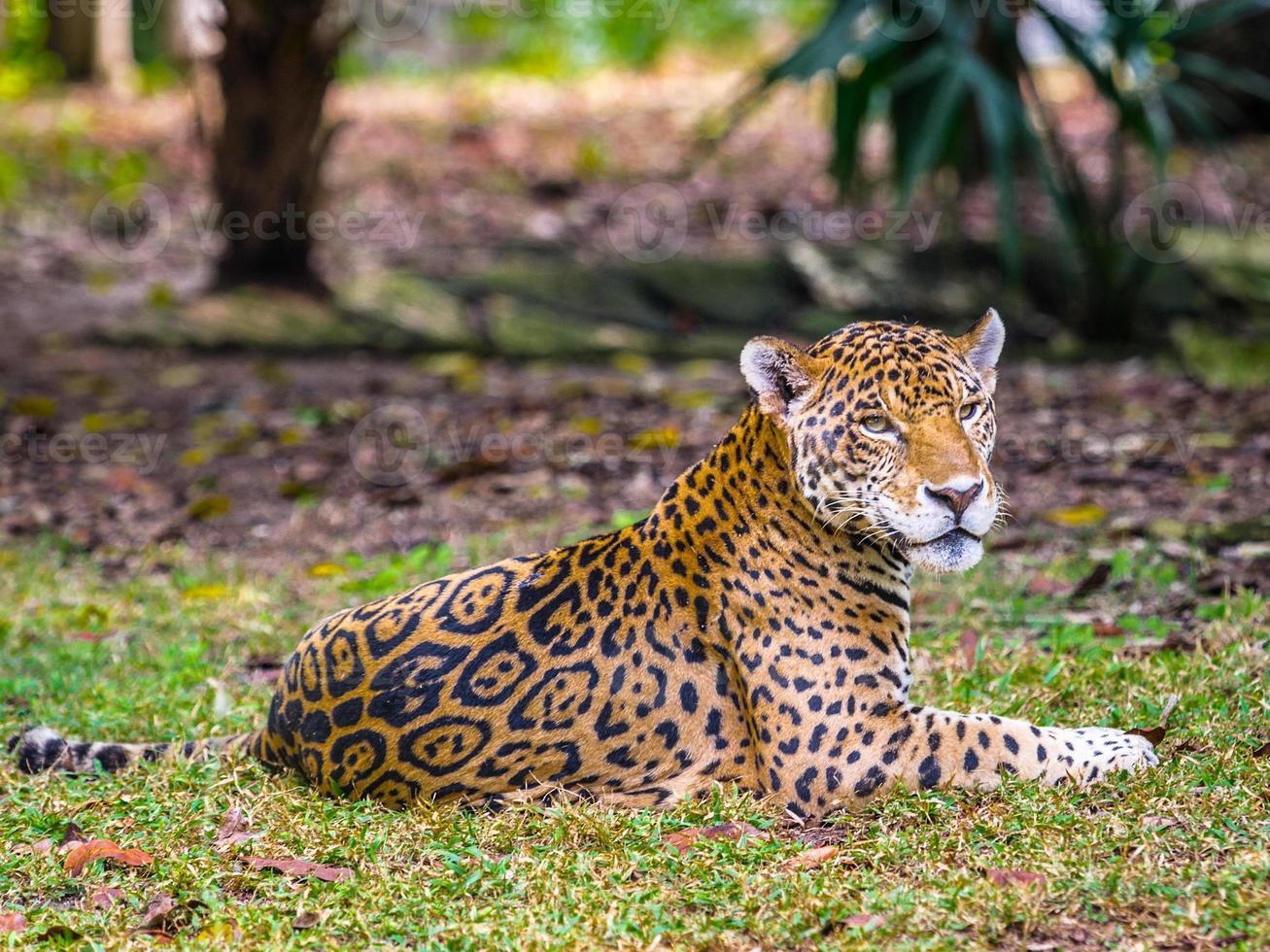 Dschungel von Mexiko foto