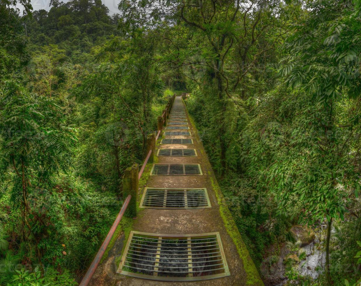 Brücke in den Dschungel. foto