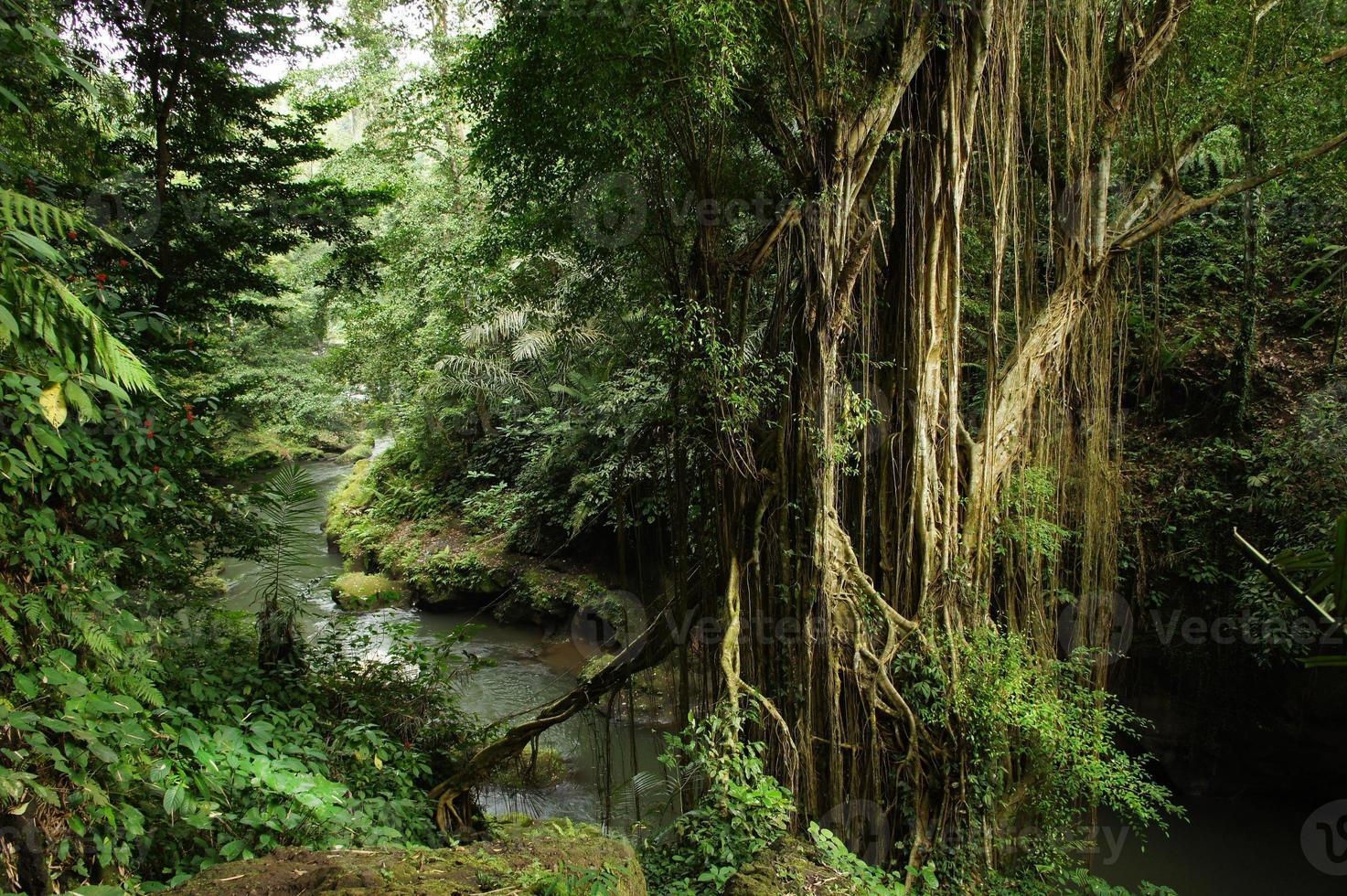 Dschungelfluss, der sich durch Wald auf Bali-Insel, Indonesien windet foto