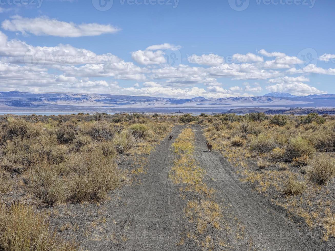auf einer verlassenen Wüstenstraße foto