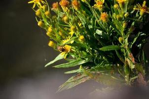 Biene bestäubt eine Blume