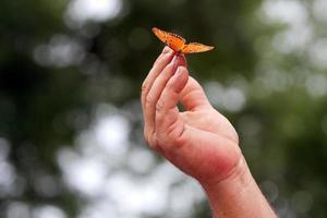 Der orangefarbene Schmetterling ruht auf den Fingerspitzen der Hand des Mannes foto