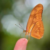 orange Schmetterling foto