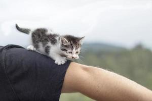 Katze geht foto