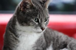 Katze konzentriert sich auf etwas foto