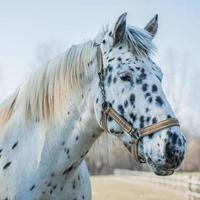 Porträt des Pferdes foto