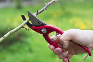 rote Haarschneidemaschine, die am Zweig verwendet wird foto