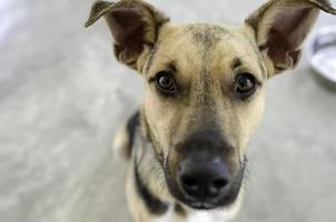 Hund und Schüssel foto