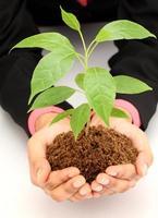 Geschäftsfrau, die Babypflanze weiß hält foto