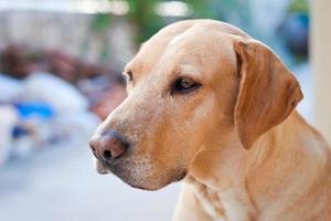 Porträt des Familienhundes, der in der Ferne sitzt.