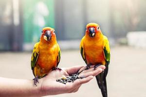Papagei auf Frauenhand im Park